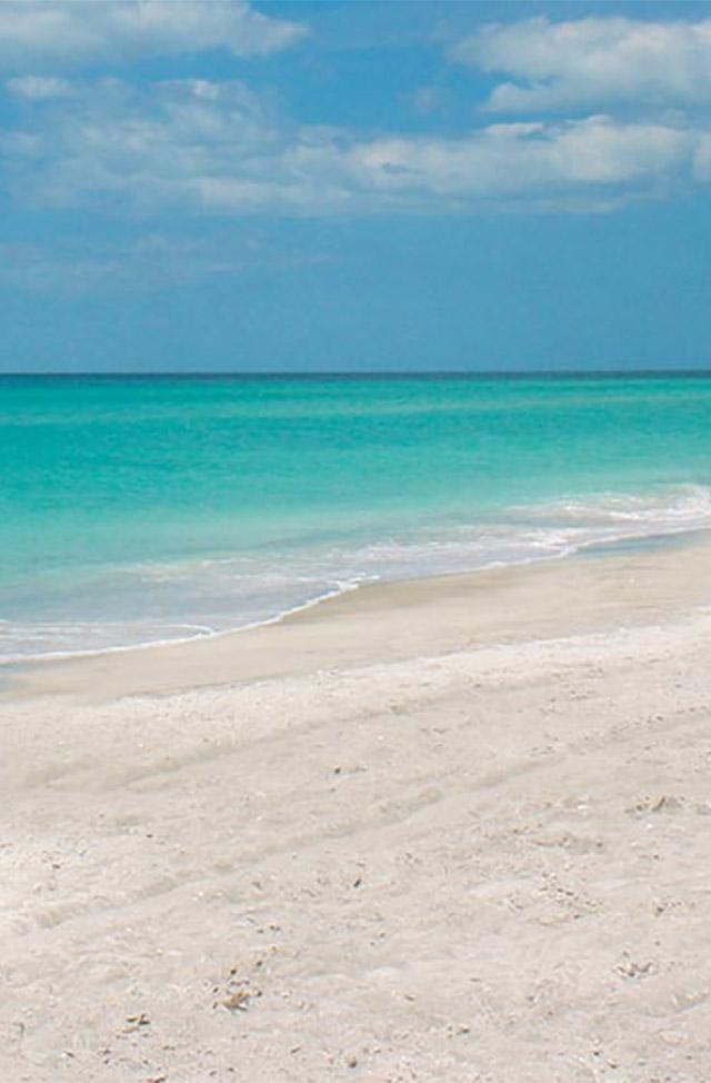 Beach Palms Siesta Key Fl United States