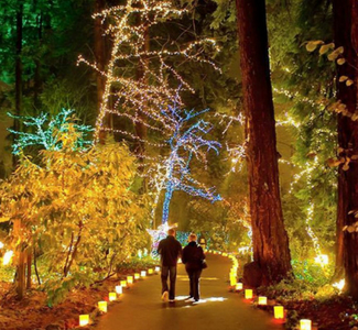 the grottos christmas festival of lights portland oregon oxford suites portland oregon hotel